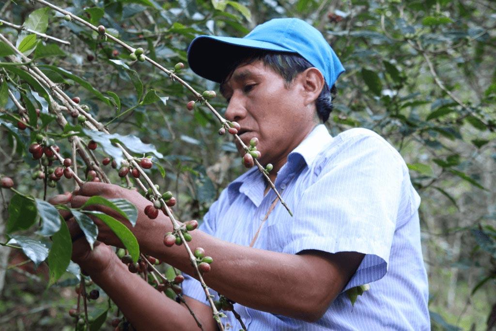 Peruánská káva pro pravé kávové gurmány